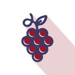 Viticulture œnologie